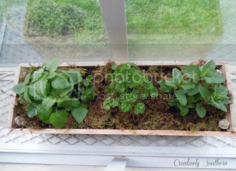 diy planter box herb garden gro project