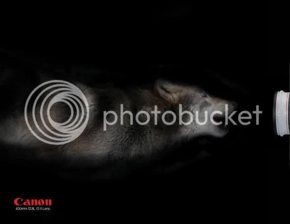 EF 400mm f/2.8L