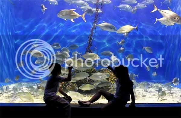 Manila Ocean Park (City of Manila) - Oh! The Places You Go!