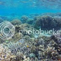 Colase Marine Sanctuary: A Colossal and Rich Marine Treasure in Samboan