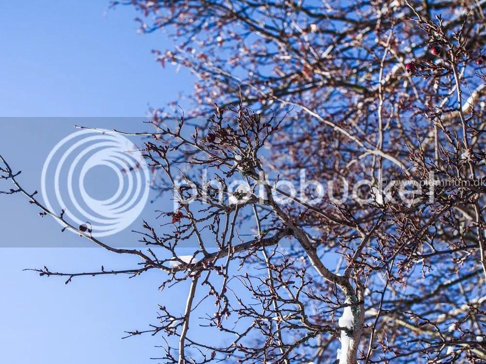 photo P1011391_zpsrv8m75qe.jpg