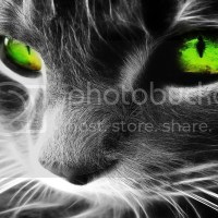 Slike životinja | Mačak sa zelenim očima