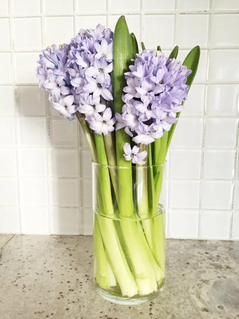 happy weekend hyacinths