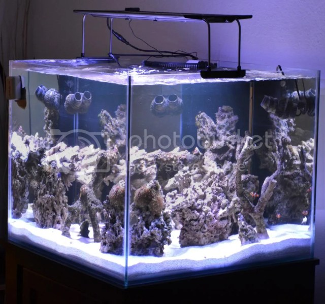 100 gallon rimless fish tank 100 gallon rimless for Cube saltwater fish tank