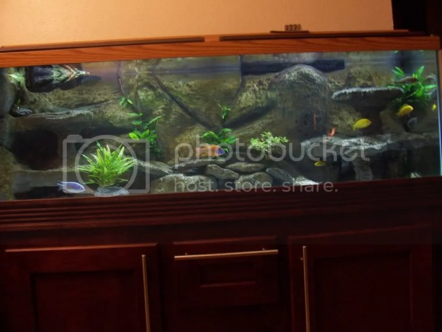 BCH: diy 3d background aquarium