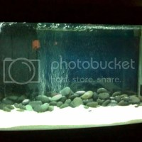 10 gallon fish tank jebo - Jebo 10 Gallon Aquarium System