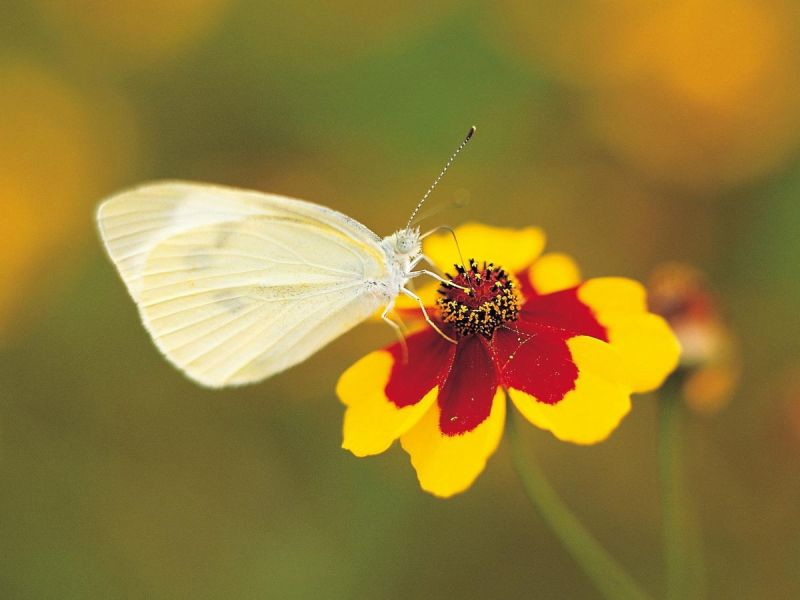 Large Of Little White Butterflies