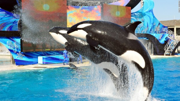 New SeaWorld whale pool approved -- with breeding ban
