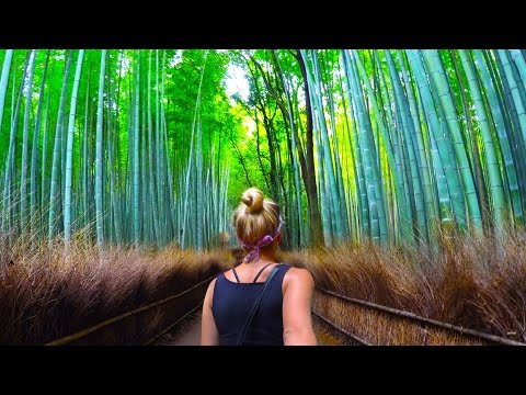 BAMBOO FOREST + SCARY MONKEYS (Kyoto Japan)