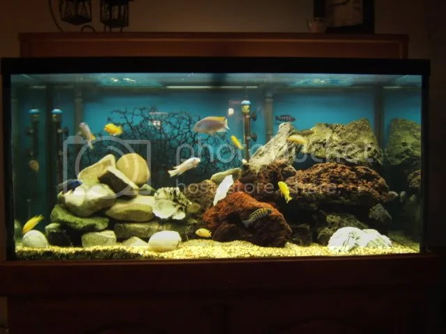 re decorated this tank today really like the new look