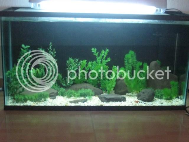 20 gallon fish tank beginners beginner 25 gallon for Beginner fish tank