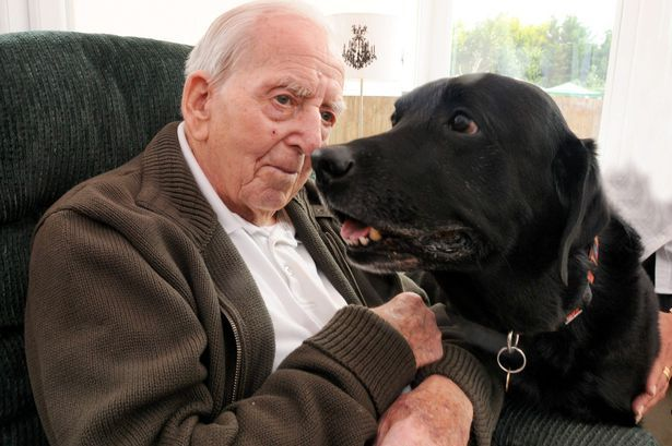 Bob the Labrador, who has died after being looked after at the Burnham Lodge Nursing Home since his owner, Harold Pursey, passed away in 2010. Pictured - Bob the Labrador and Harold Pursey