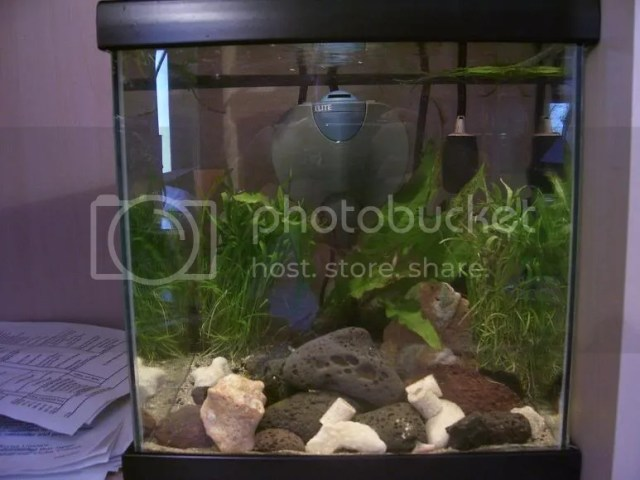 The java sea  10 gallon brackish journal   Nano Aquariums   Aquatic