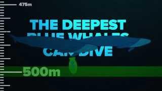 Bạn có hình dung độ sâu của đại dương?