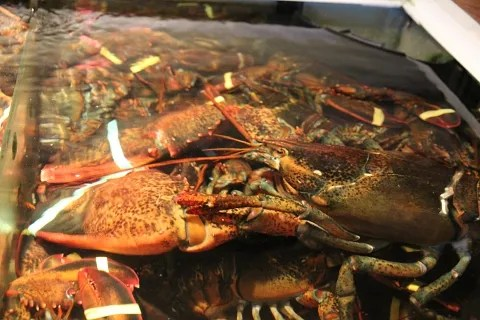 Lobsters at Union Oyster House Boston