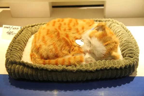 Stuffed kitten sleeping