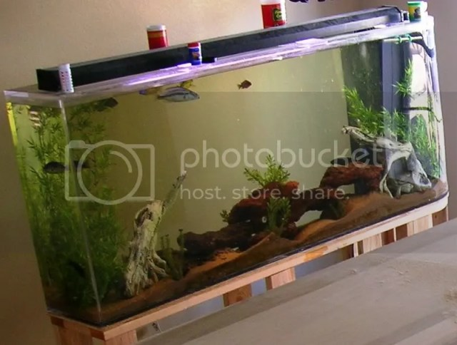 Odd Shaped long tall tank aquascaping HELP!!!   Reef Central Online
