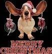 christmas basset hounds photo: Merry Christmas Basset Hounds! MerryChristmasBassetHounds.jpg