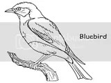 Perched in a tree blue bird coloring pages for kids to color.