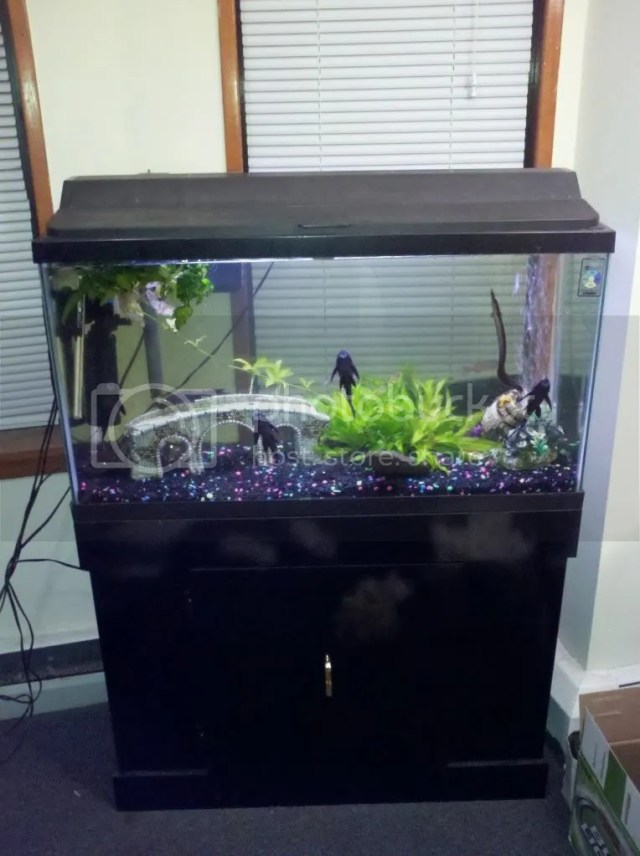 Fish tank maintenance 30 gallon 30 gallon Thirty gallon fish tank