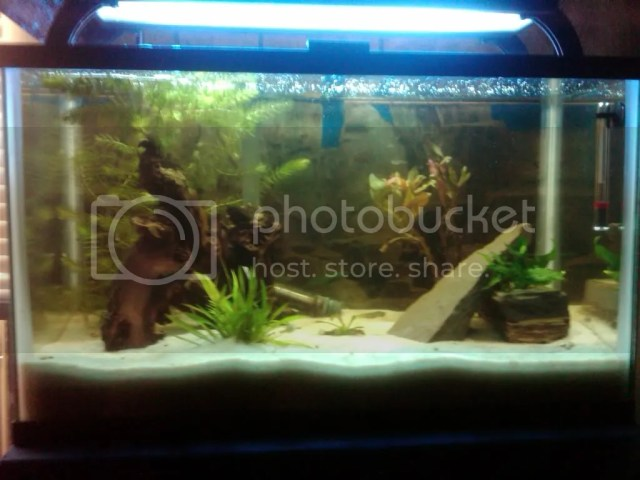 could clear dwarf 10 to but aquarium. Heavily puffer tank the come an