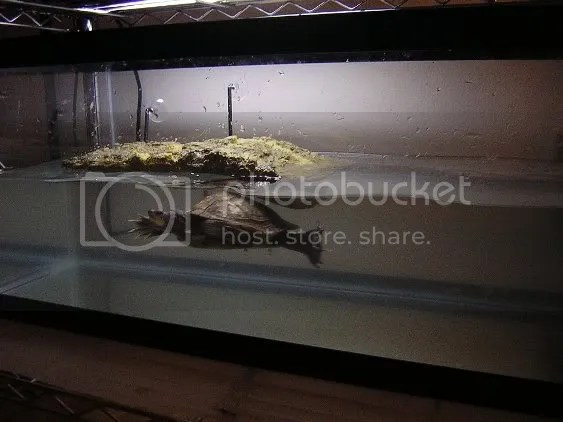 Request Red Eared Turtle Setup or any turtle   CornSnakes.com Forums