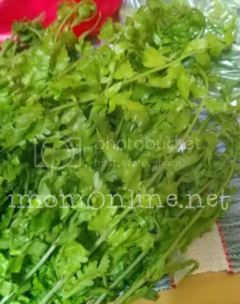 pako salad recipe fiddle fern