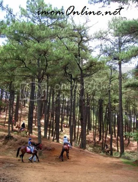 Horseback riding in Baguio Camp John Hay