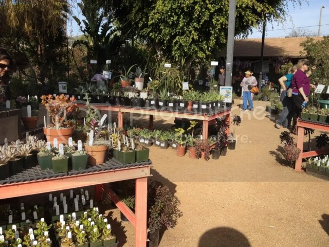 long beach horticulture department spring plant sale fundraiser 2014