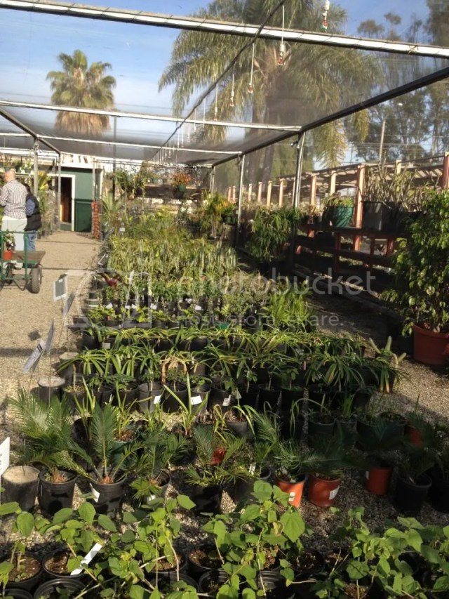 2014 plant sale long beach city college LBCC california native plant succulents fruit trees vegetables tomatoes peppers.