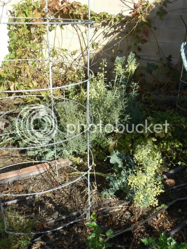 P1290017 1 A Messy Garden...