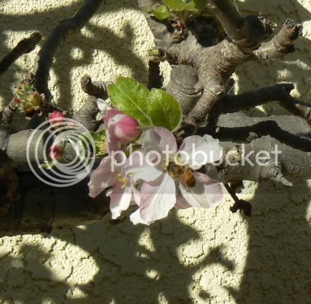 P1290057 1 A Messy Garden...