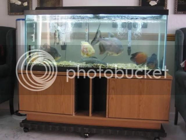 100 gallon fish tank dimensions - 100 Gallon Tank with BIG Fish and ...