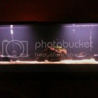 100 gallon fish tank 3d background - Planted Tank | PetryDesigns