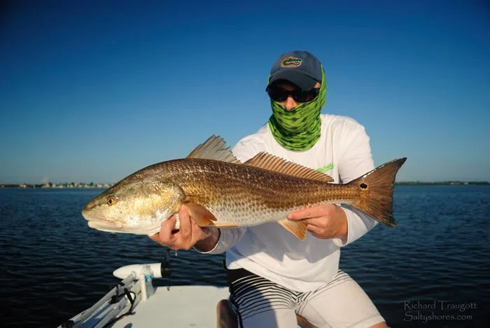 9lb Breeder Redfish + Fall Mullet run