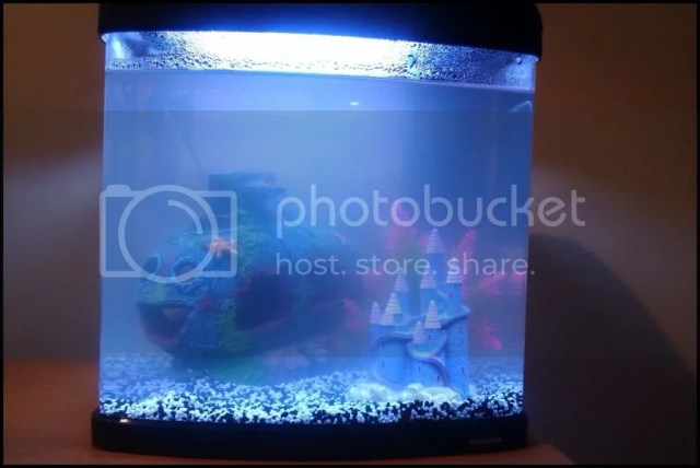Freshwater fish tank maintenance has cloudy water 2017 for My fish tank water is cloudy