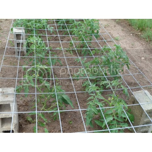Medium Crop Of Texas Tomato Cages