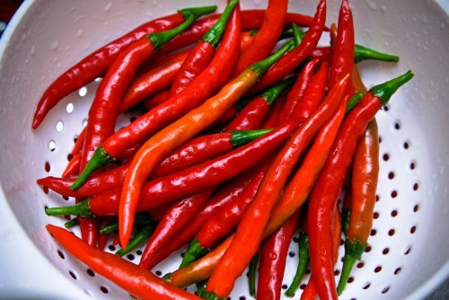 20090823 - Cayenne Peppers