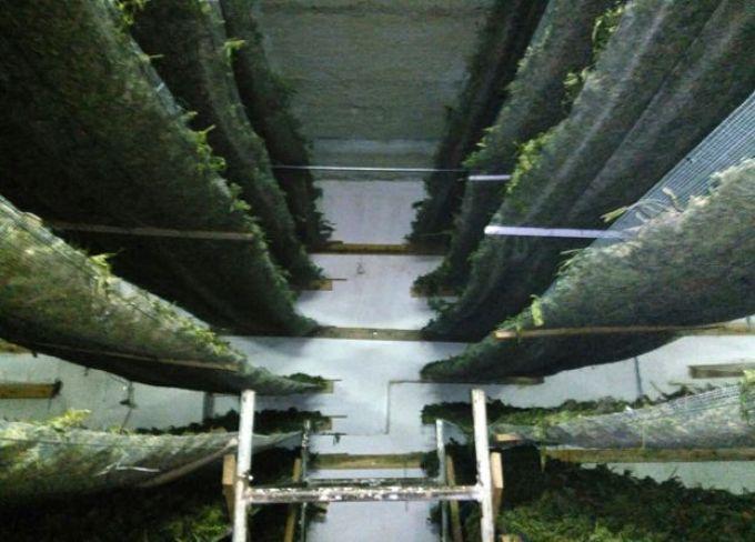 Cannabis in warehouse