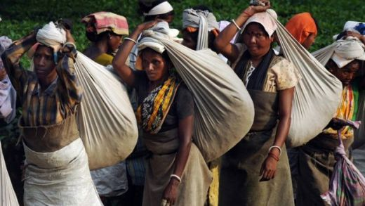 Women tea workers balance bags of plucked leaves on their heads