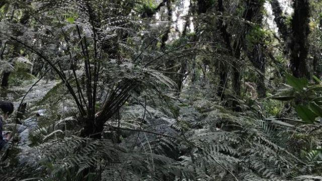 Floresta tropical na região da cratera
