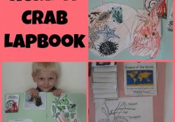 Hermit Crab lapbook