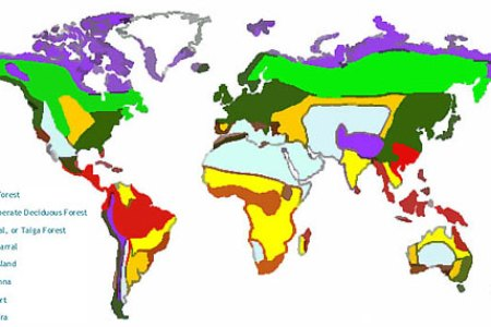 Map Of World Biomes - Biomes map of the us