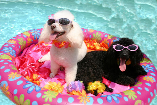 dogs-by-the-pool