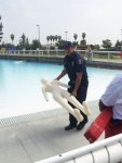 Photo/MJ Duncan Seven inflatable bodies were placed in the pool at Splash Kingdom to remember the lives lost last year to water submersion. Splash Kingdom lifeguards, who then handed them over to personnel from the Redlands Fire Department, individually retrieved them.  Pictured is Jerome Mathieson from RFD.