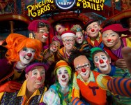 courtesy photo/feld entertainment</p><br /><br /><br /><br /><br /><br /> <p>The circus isn't complete without some clowning around. The crew of Clown Alley will be up to crazy antics during the show.