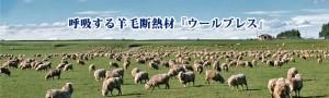 pt-woolb