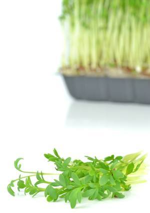 Watercress for watercress and carrot juice