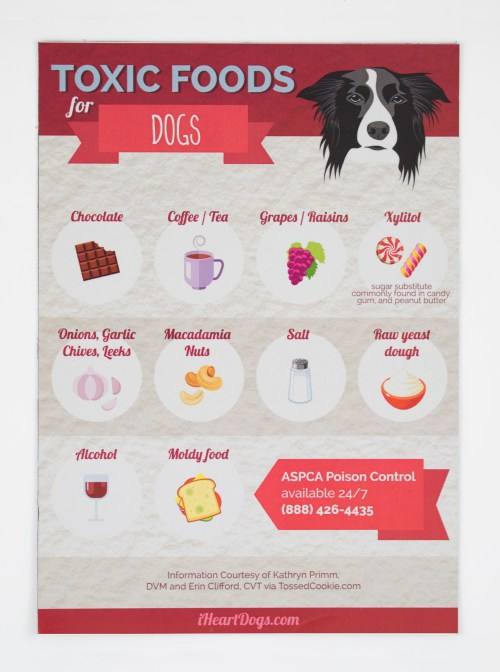 Charmful Toxic Dog Foods Refrigerator Magnet I Heart Dogs Videos I Heart Dogs Petfinder