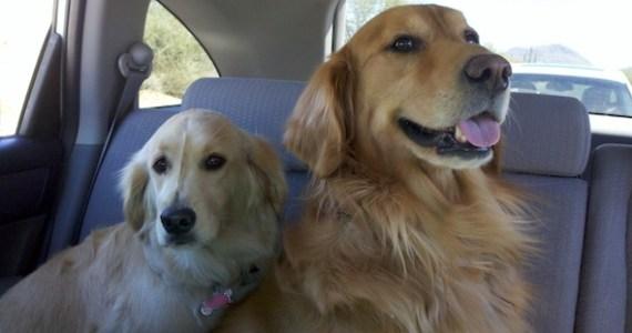 Pups_Carride